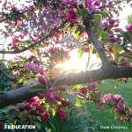 friducation-brand-culture